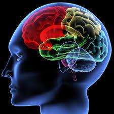 Your IB Psychology Resource