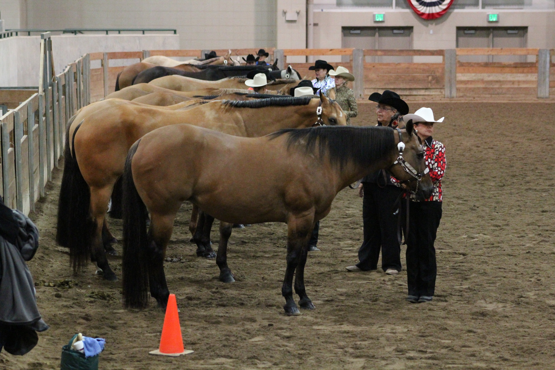 Show Some Love - Send Us Your Senior Horse Success Stories In the Show Pen