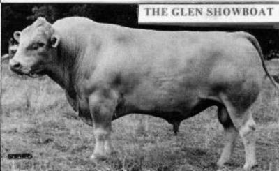 The Glen Showboat (AU breed reference sire)