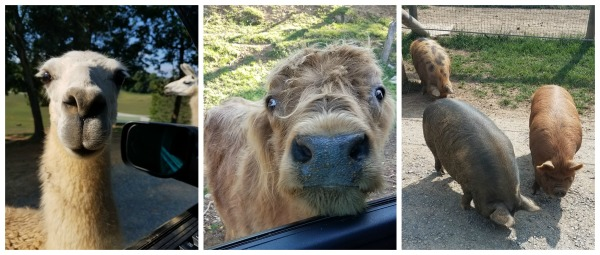 5 Tips you need to know before going to the Virginia Safari Park