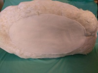 white mute swan taxidermy , padded felt bottm