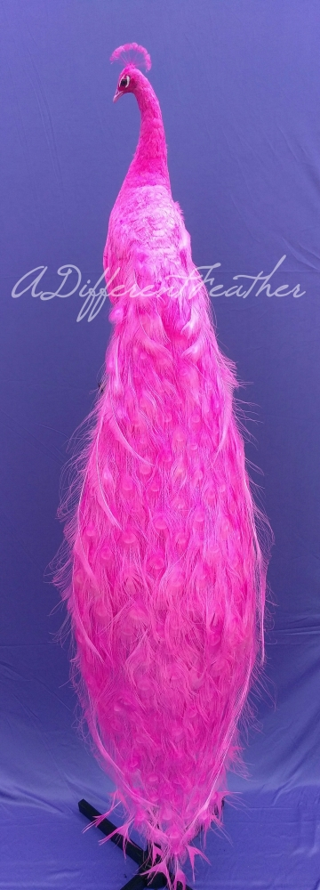 pink peacock taxidermy bird mount for party planners, home decor, interior design, window displays and pride decorations