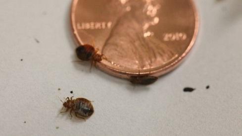 Kill Bed Bugs