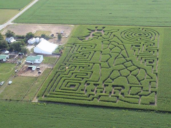 IHR Corn Maze