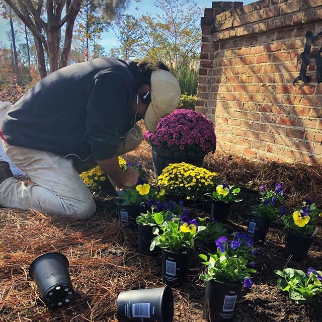 planting and pruning experts