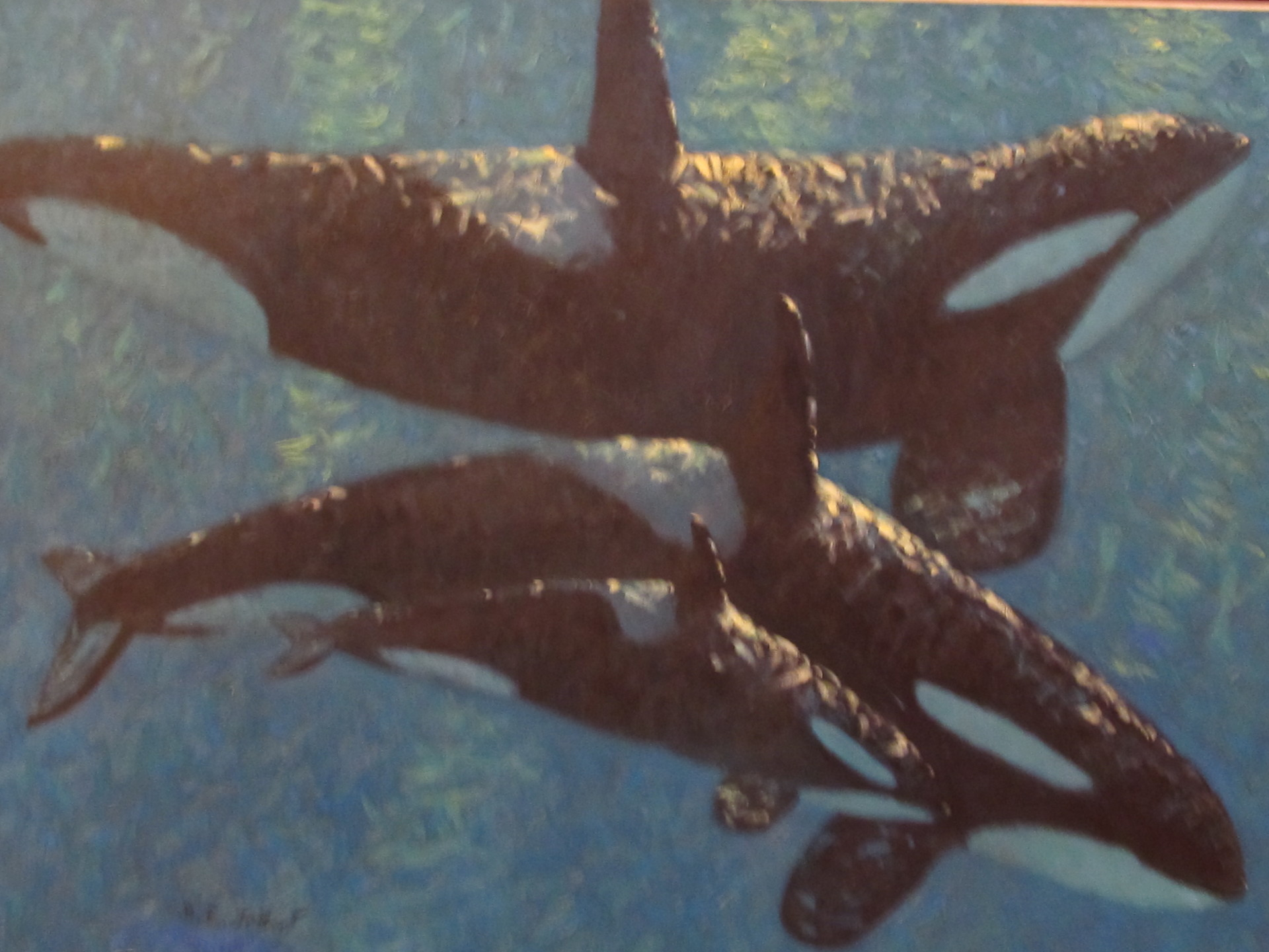 A pod of Killer whales swims in the ocean,  43 x 57 oil on canvas