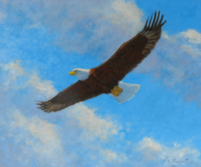 A Bald Eagle soars through the clouds, Oil on canvas 20 x 24