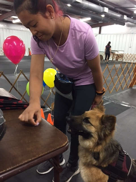 practicing therapy dog sign in
