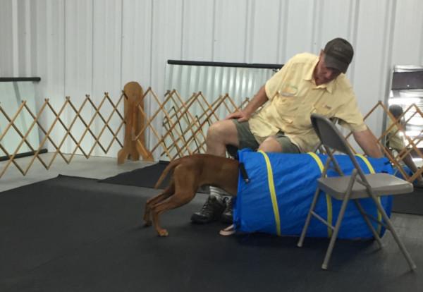 Dog Beginner Class