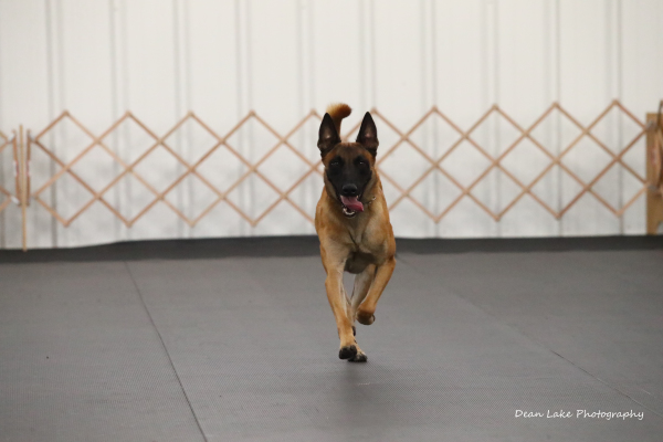 CFDTC August Dog Trial
