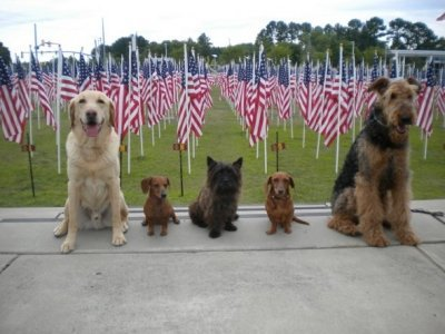 Dogs at Field of Honor