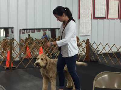 Cape Fear Dog Training Club
