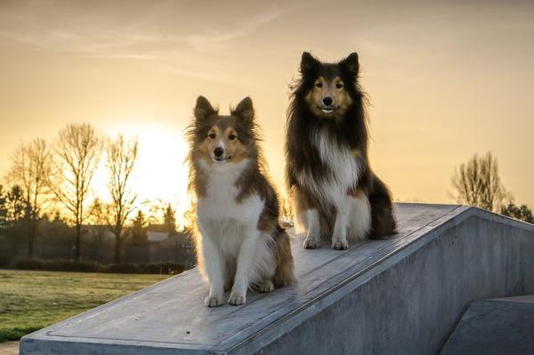 Dog training, puppy training, sit stay