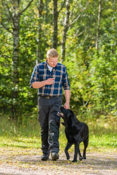 Teach dog to heel, no leash pulling