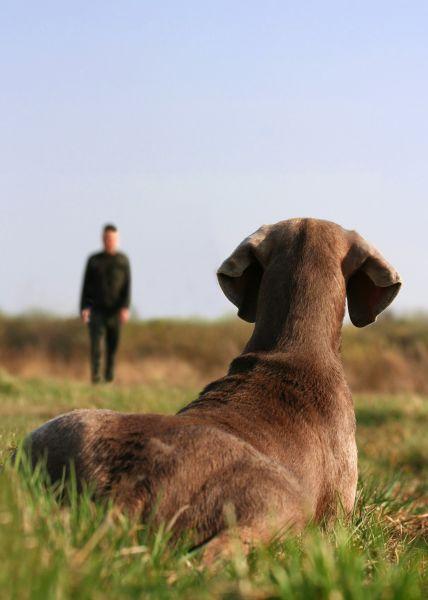 Dog Obedience, dog training, puppy training