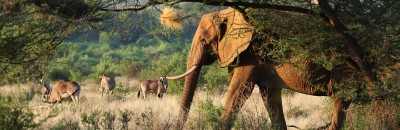 The Elephant in the Room: Elephants and Us
