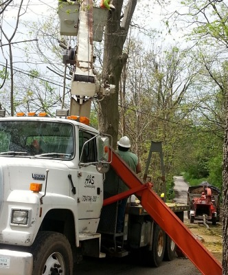 tree cutting and removal - stumps - firewood - hardscape - delivery - climbing - trimming - pruning