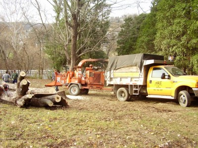 Tree and Stump removal - washington county - pittsburgh - canonsburg - peters
