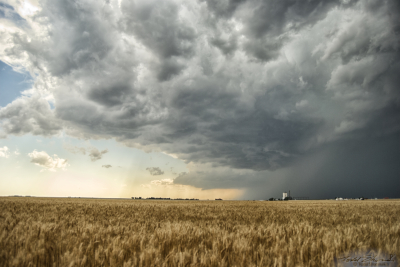 A supercell thunderstorm takes shape over golden wheat fields in the Oklahoma panhandle on June 3, 2008.