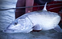 monster bonefish guadeloupe
