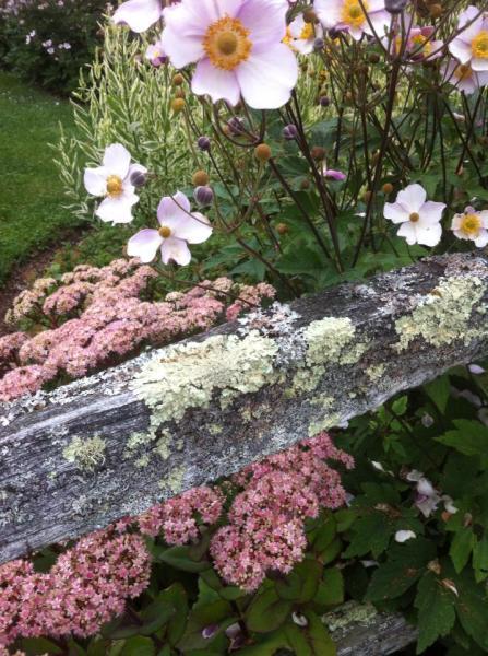 Beginnings of Blooms