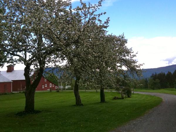 apple trees begin