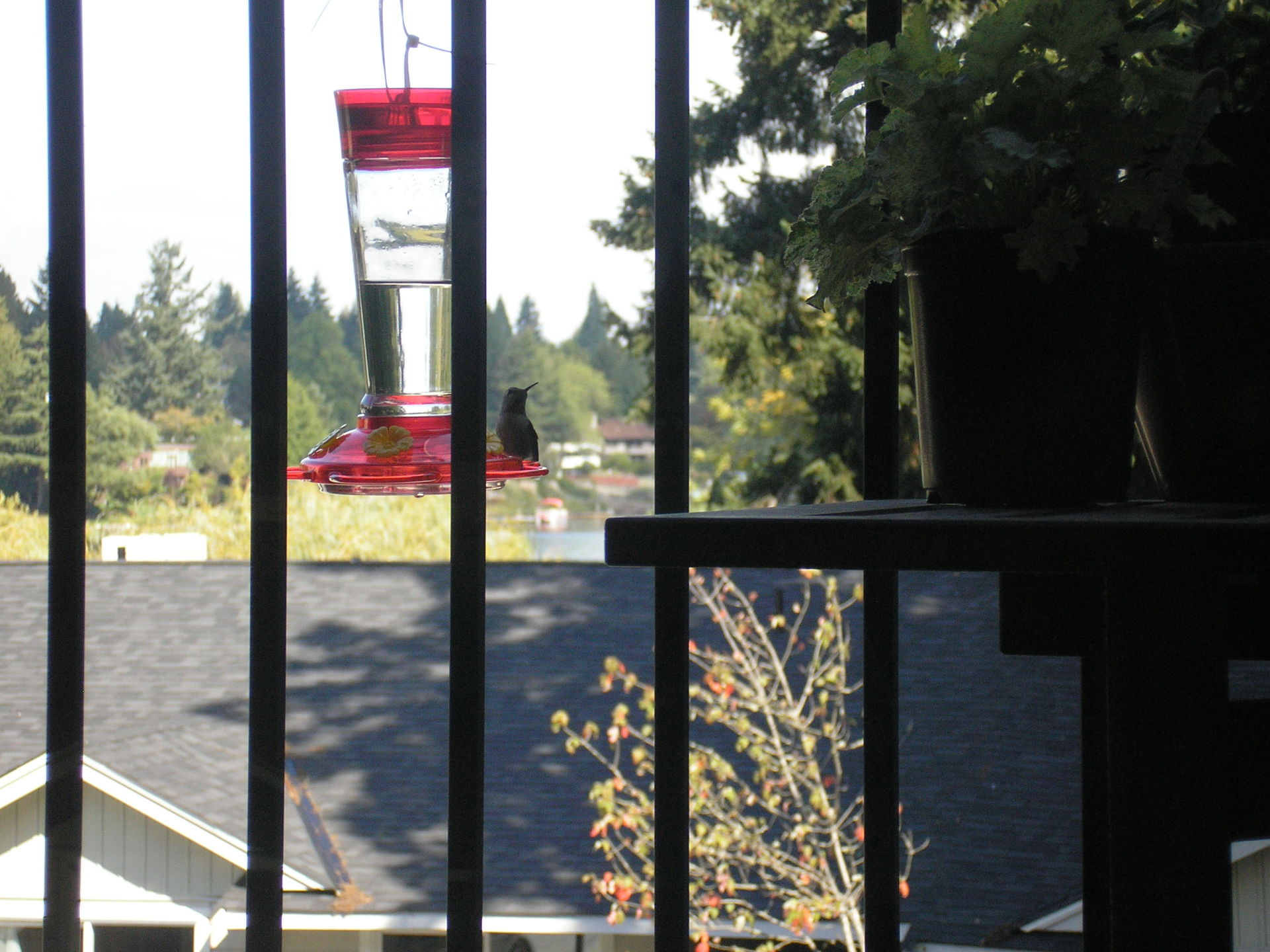 The hummingbird feeder