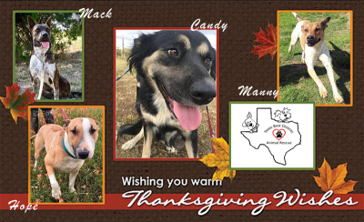 TBC pups are thankful for you!  ❤