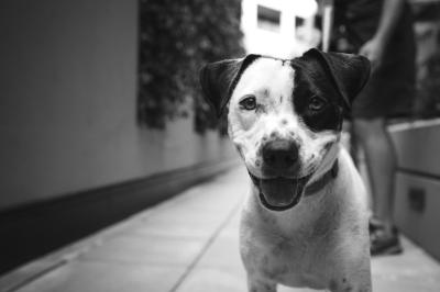 "alt=""ASPCA lifted karma project philanthropy rescue dogs canines cbd"""