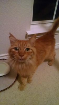 declawed senior cat