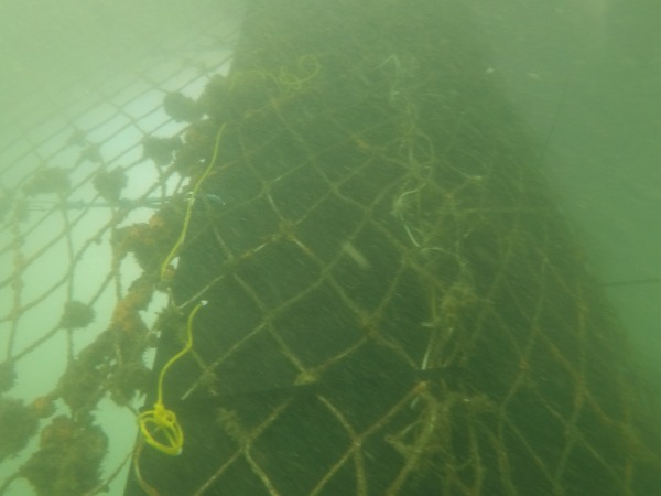 Shark Net Repair Sydney