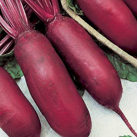 CYLINDRA BEETROOT