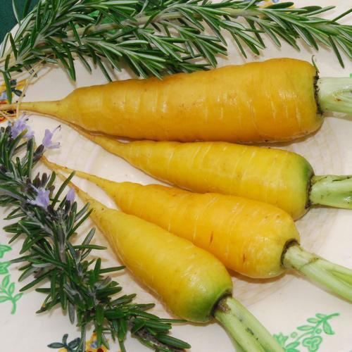 SOLAR YELLOW CARROT - ORGANIC