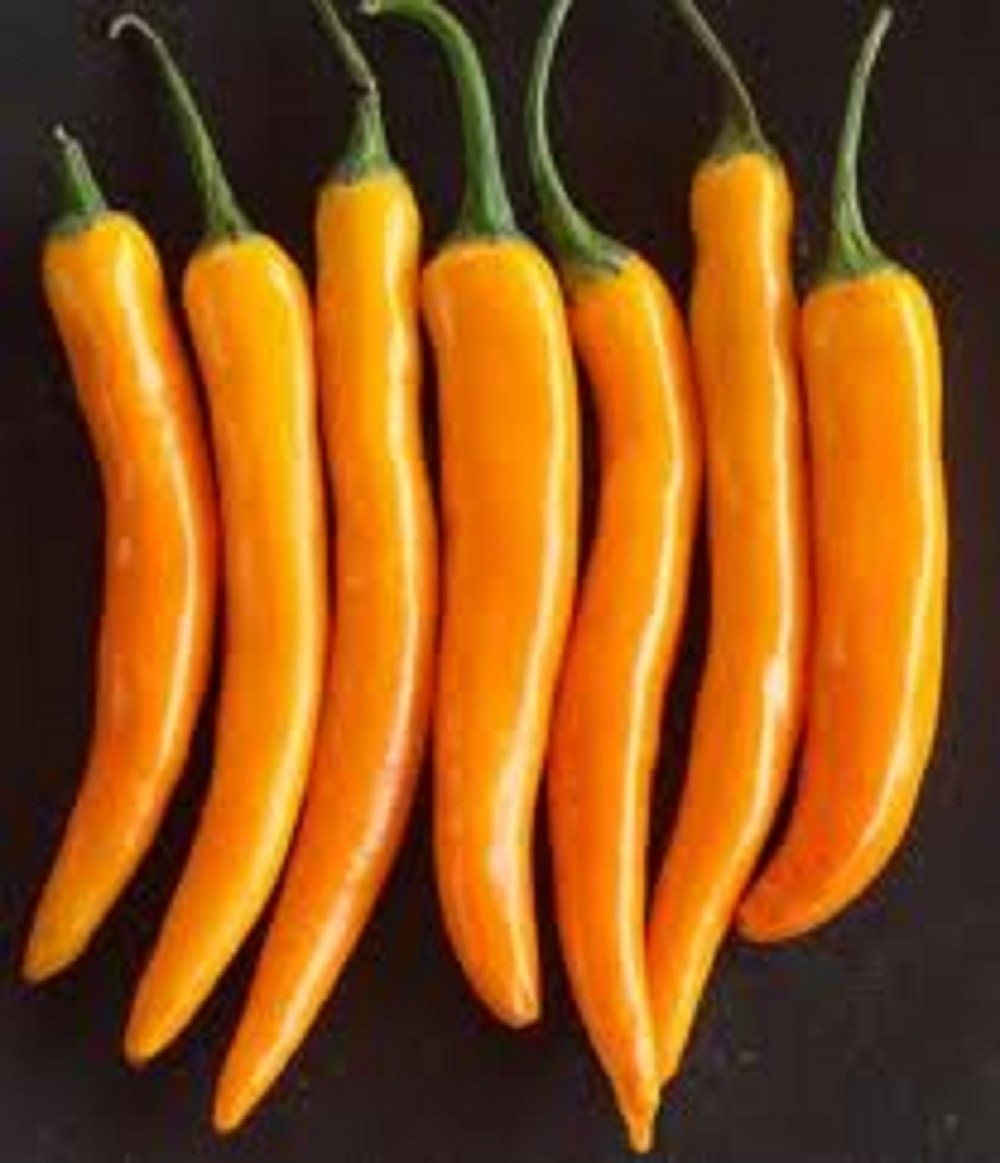 BULGARIAN CARROT CHILLI PEPPER