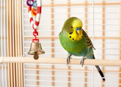 Small Bird: $9.95