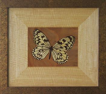 D184 Butterfly