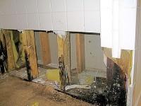 mold remediation, mold