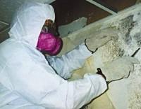 mold inspection, mold inspector