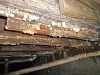 mold on wood, mold contamination, mold inspection, mold testing, mold sample