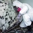 mold inspection, mold remediation, mold sampling, air testing, mold testing