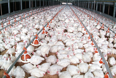 Typical poultry farm