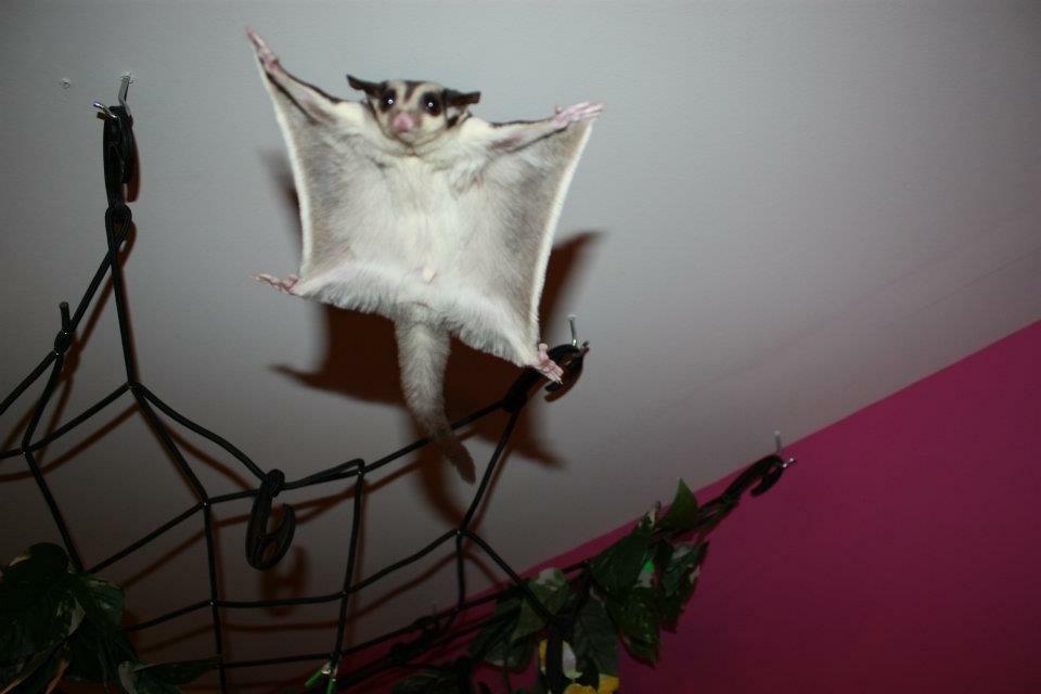 Bandit in flight
