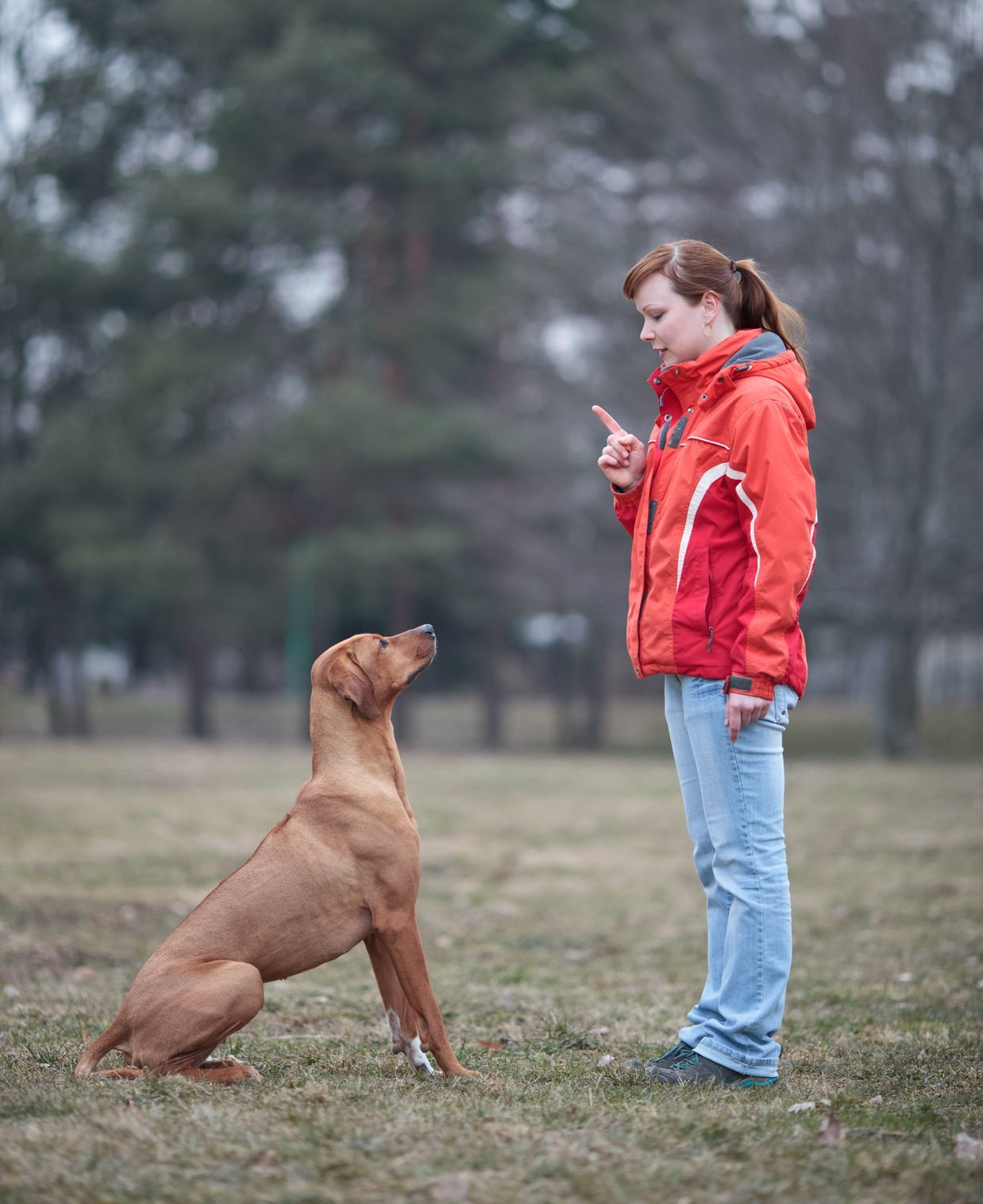 Did you know that dogs are far more visual than they are verbal?