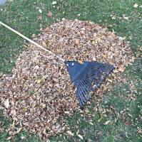 Leaf Removal Brandon