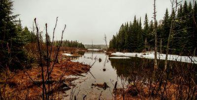 Tomlinson Lake