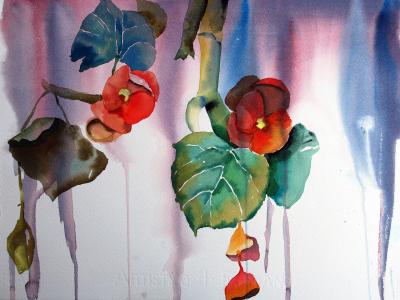Dripping Begonias