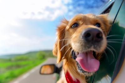 Global Dog blog- Chew on This