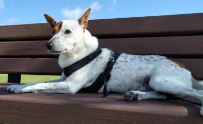Our Mission - To Make a Difference for All Dogs