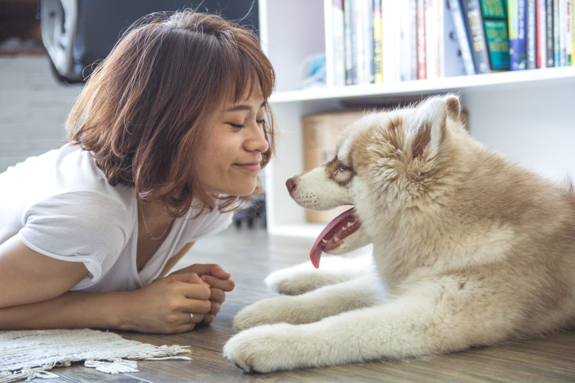 How dog owners have become dog fanatics