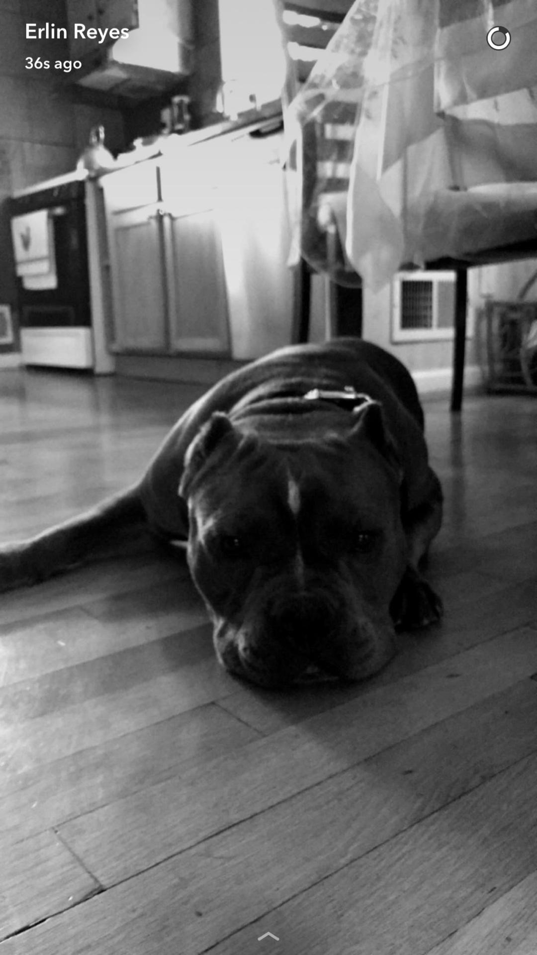 Sad Pup!